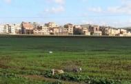 مجلس الوزراء: المصادقة على مرسوم يتعلق بإلغاء تصنيف أراض فلاحية من أجل إنجاز 11 منطقة صناعية
