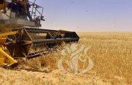 فلاحة: الرئيس تبون يدعو للتوجه أكثر نحو إنتاج القمح الصلب